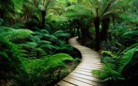 Taller de información ambiental paraperiodistas